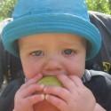 Apples and Authentic Scientific Practices